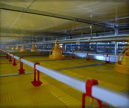 Broiler Cage Systems Feeding System
