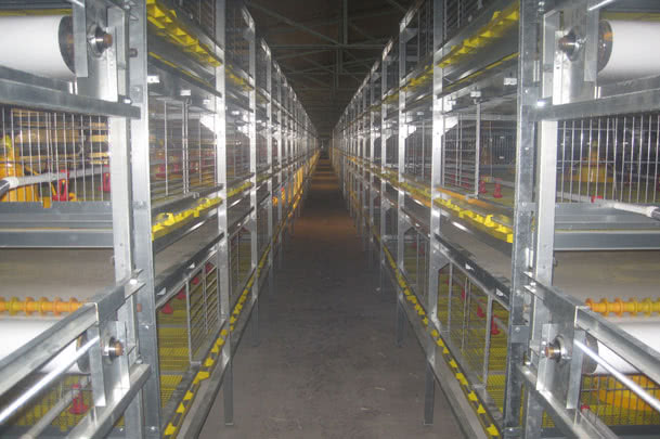 Broiler Cage Systems