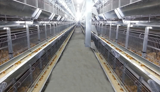 Egg Chick Cage Systems