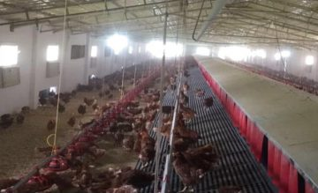 Natural Poultry Farming