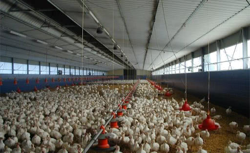 Turkey Feeding Systems
